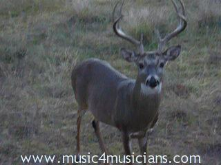 click to start whitetail deer rut video